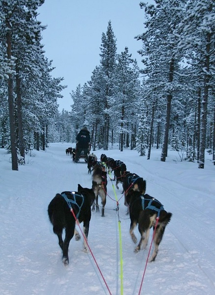 Dog sledding through the forrest
