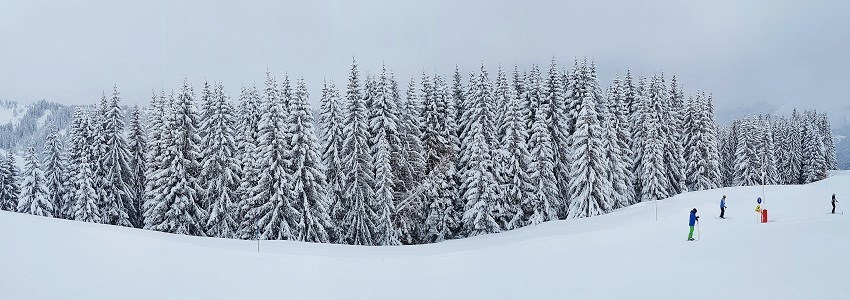 Snow covered trees of Morzine Ski Resort France