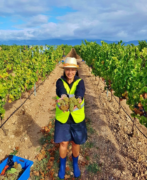 Melbtravel showing freshly picked grapes