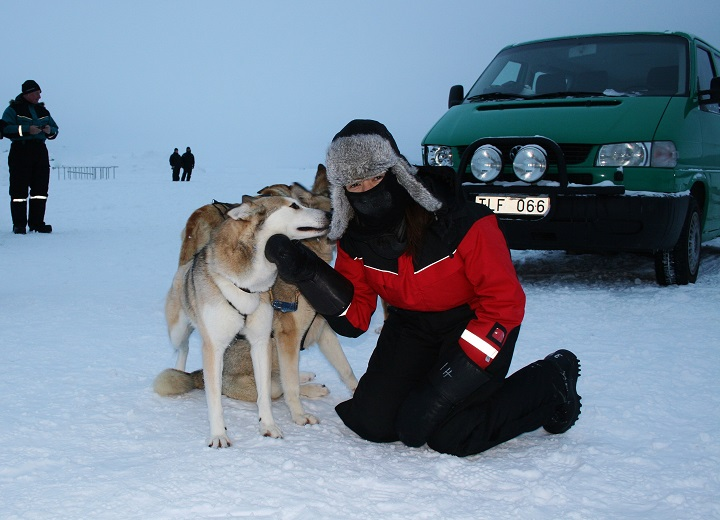 Mel petting the sled dogs in Kiruna