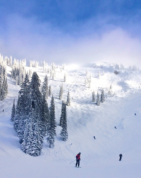 Mogul runs through the snow covered trees