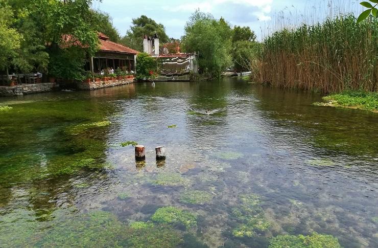 Ducks on the waterway in front of restaurant