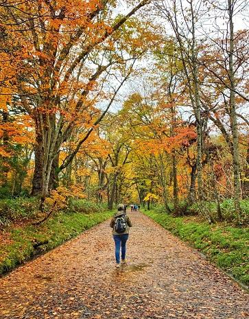 Hiking Togakushi Shrine Japan