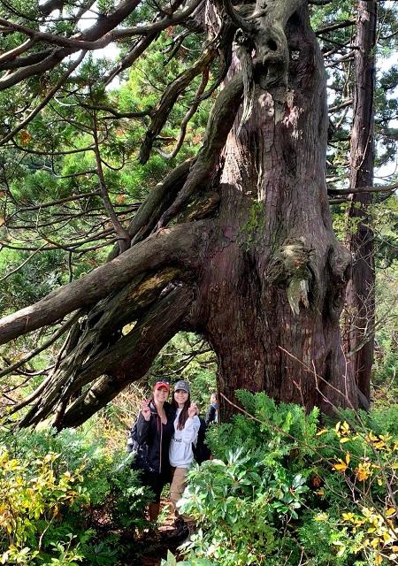 Osado Ishina Natural Cedar Forest Sado Island Japan