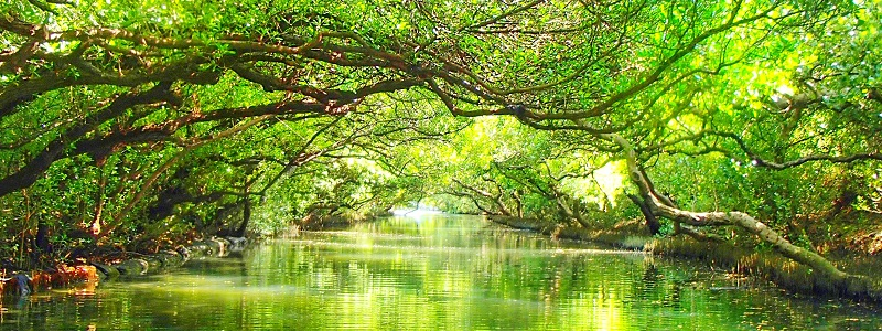 Sicao Mangrove Gree Tunnel top Historical sites to see in Tainan