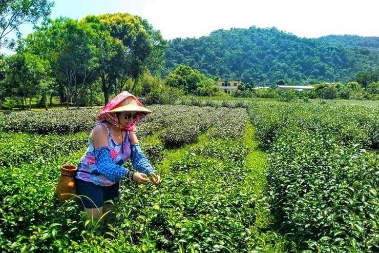 Making tea Interesting things to do in Yilan County Taiwan