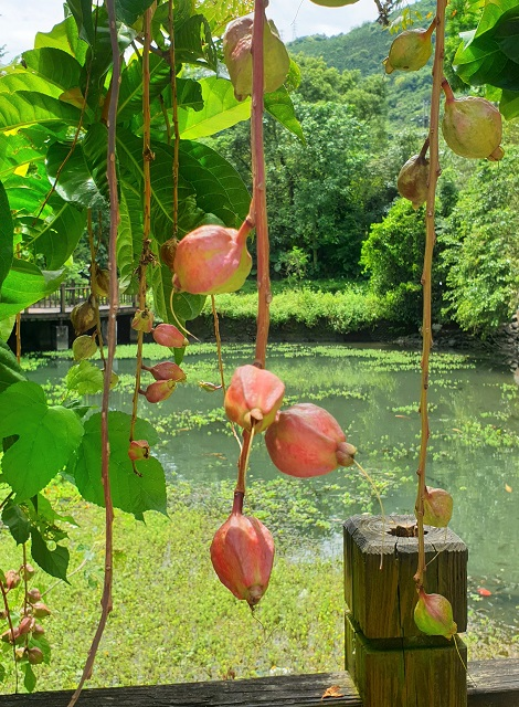 Fata'an Wetlands Ecological Park Things to do in Hualien Taiwan