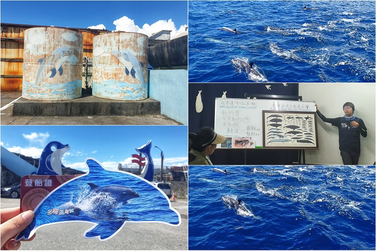 Whale & Dolphin - Outdoor things to do in Hualien Taiwan Asia